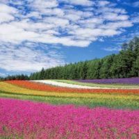 flower-garden-blue-sky-hokkaido-japan