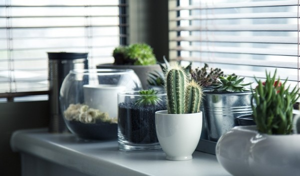 pots-plants-cactus-succulent-shelf-window-garden