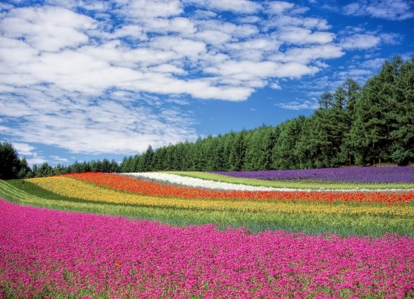 北海道旅行|持ち物、これだけは持っていくべきベスト5