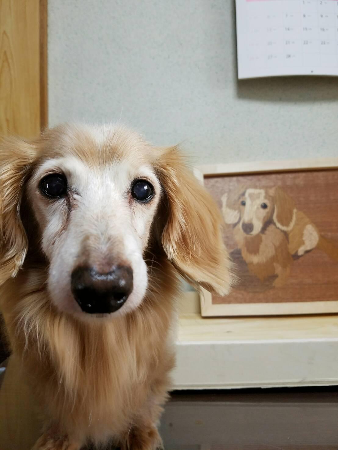 「愛犬象嵌」大切な家族の一員を木のアートにするプロジェクト